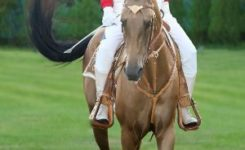 Ahalteke Atları
